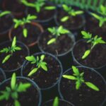 Tworzenie wydajnej i ekologicznej gospodarki o obiegu zamkniętym
