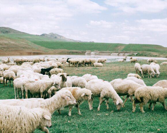 Zielone rolnictwo czyli przyszłość dla ziemi