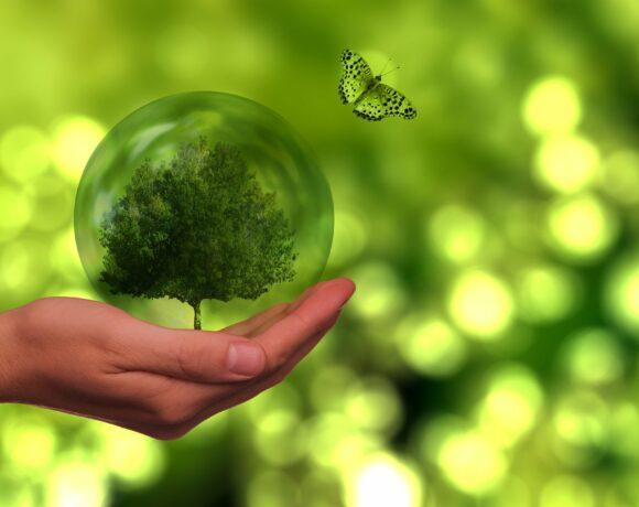 Kasyna najbardziej przyjazne dla środowiska